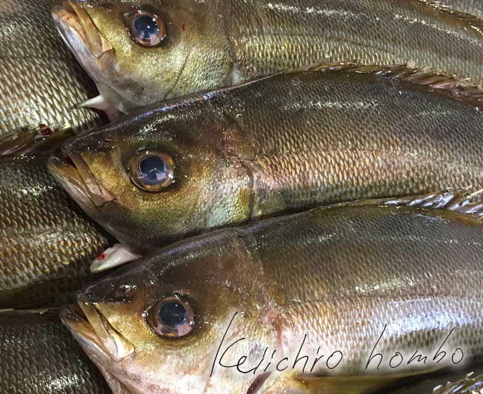 外食用鮮魚 日本一のいさき